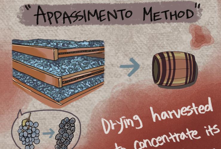 Appassimento Process for the Amarone Wine