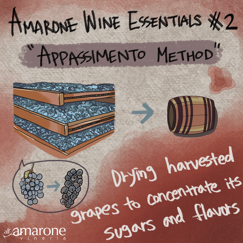 Appassimento Process for the Amarone Wine