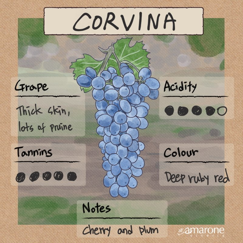 Corvina Grape Characteristics