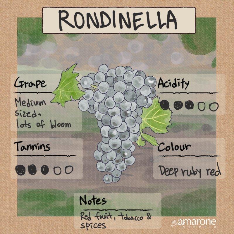 Rondinella Grape Characteristics