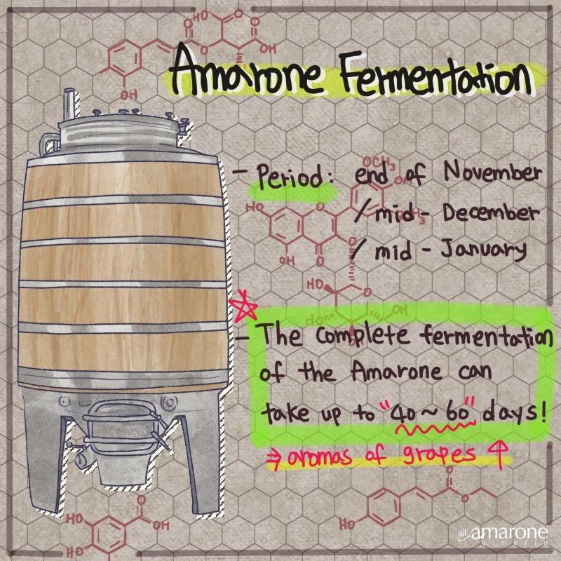 Amarone Fermentation process